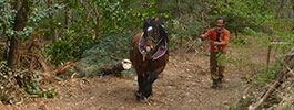 debardage-cheval